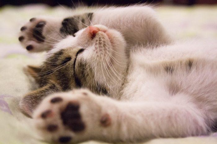 連想式睡眠法 疲れてる 眠れる