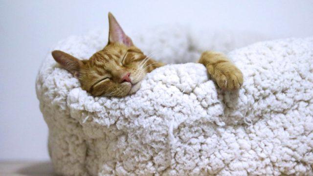 連想式睡眠法 睡眠